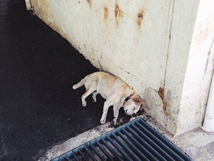 High angle view of stray dog sleeping on sidewalk