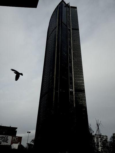 [ Tour Montparnasse, Paris ] Blackandwhite Birds Tower  Montparnasse Blanco Y Negro Noir Et Blanc Tour Montparnasse Sur Le Vif
