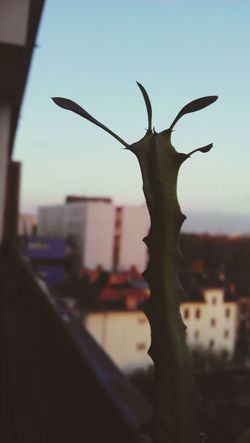 lil klementina Cactus Cactusflower Over The City Plant