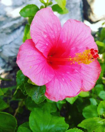 Original Photo Flowerlovers LoveFlower🌺 Bangkok Color Palette Natural Beauty