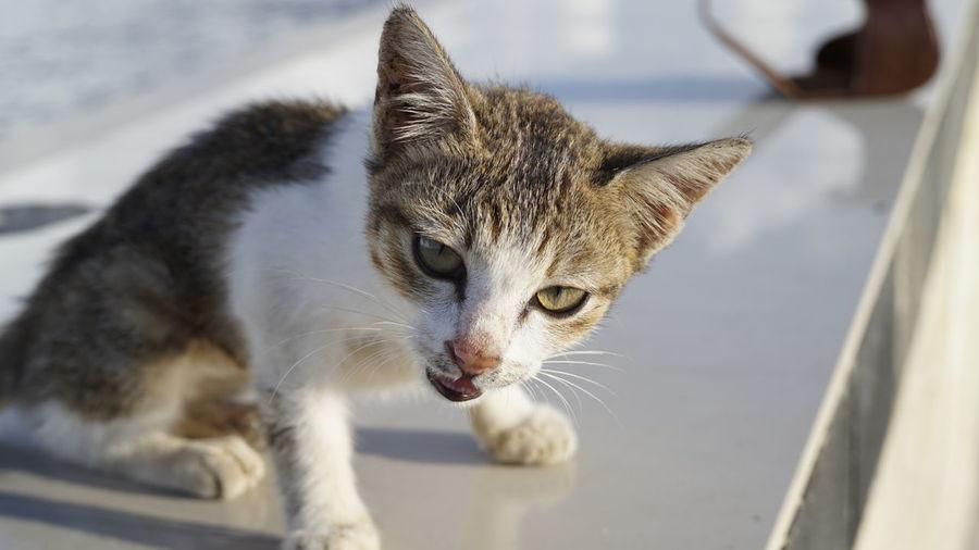 Close-up portrait of kitten on retaining wall