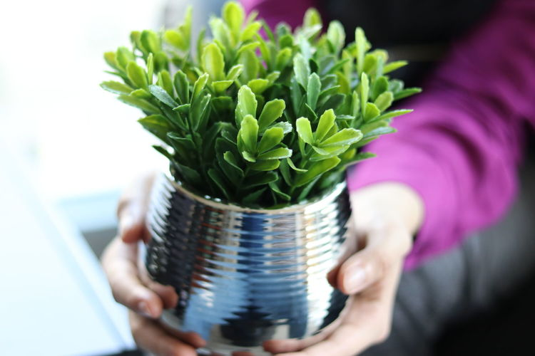 Close-up of hand holding potted plant