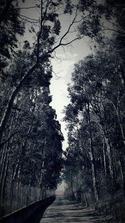 Nature Tree Sea Roadshot Silence Before The Storm Beautiful Life