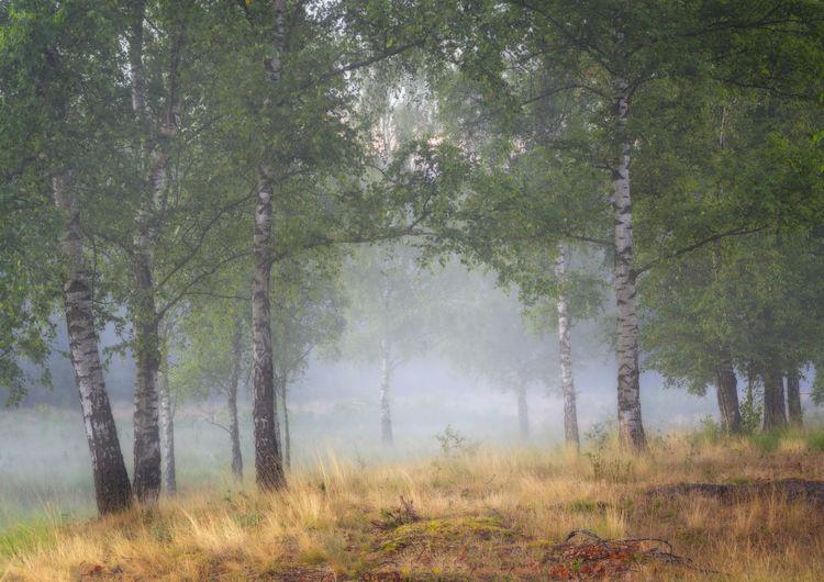Mist between