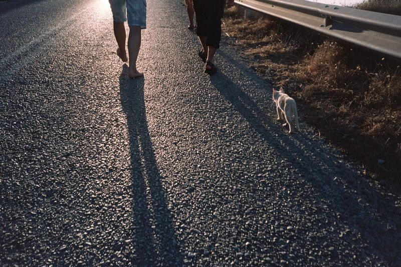 Low section of men with cat walking on road