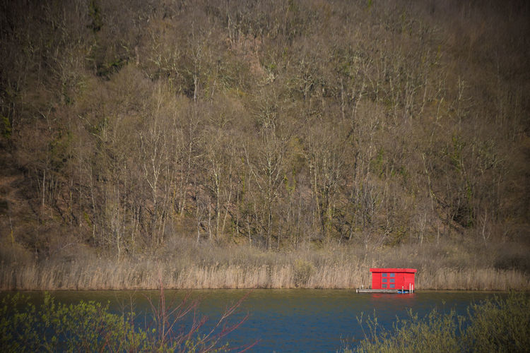 Red Color Water Plant No People Nature Tranquility Land Day Lake Tree Beauty In Nature Tranquil Scene Scenics - Nature Forest Growth Grass Non-urban Scene Outdoors Field Waterfront Floating On Water Red Cabin Hut Winter