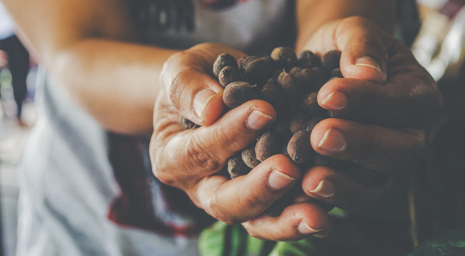 Agriculture Beans Caffeine Coffee Eating Farmer Farmland Seed Show Aroma Care Display Food Food And Drink Fragrant Fresh Freshness Hand Harvest Health Holding Lifestyles Midsection Present Product