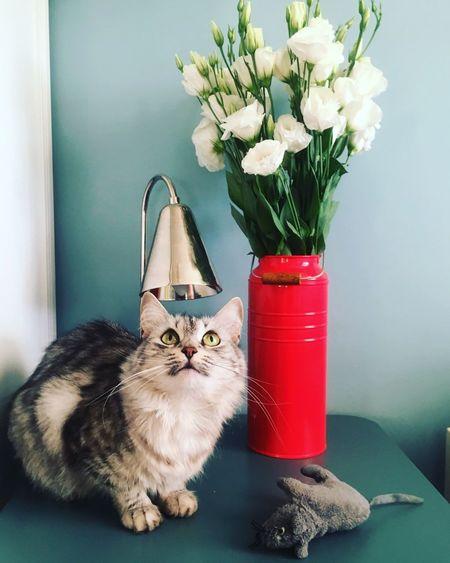 Cat By Flowers In Vase