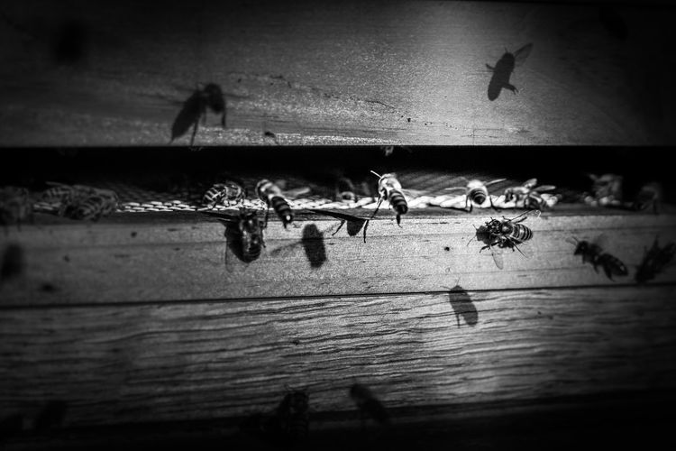 High angle view of silhouette people on wooden floor