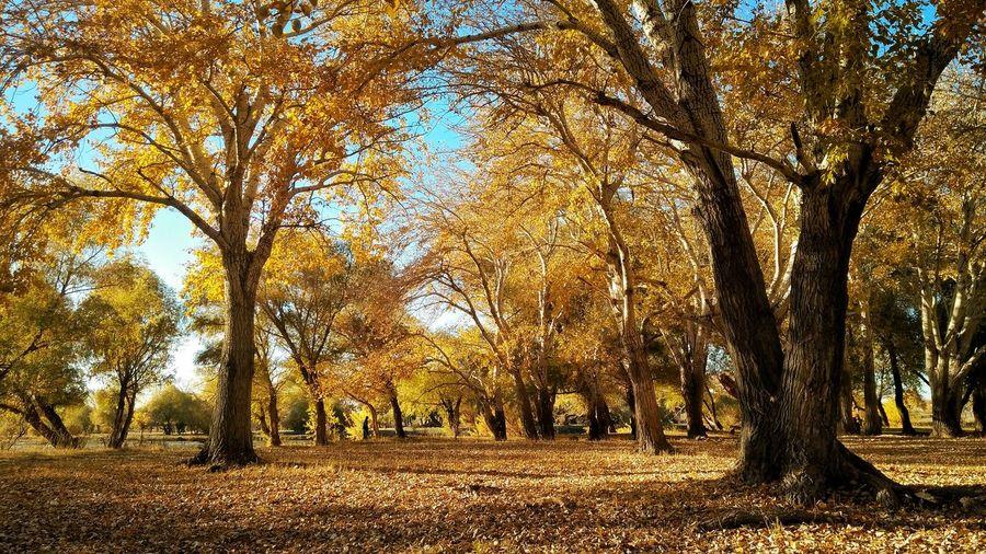 Tree Forest Tree Trunk Sunlight Branch Sky Landscape