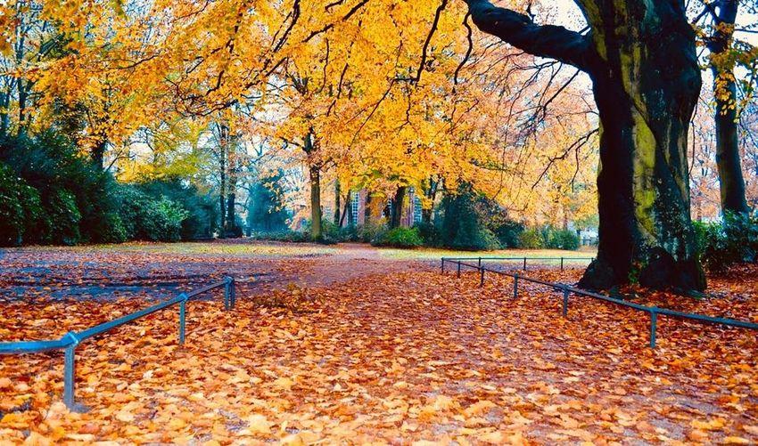 Fall Autumn🍁🍁🍁 Leaf Tree