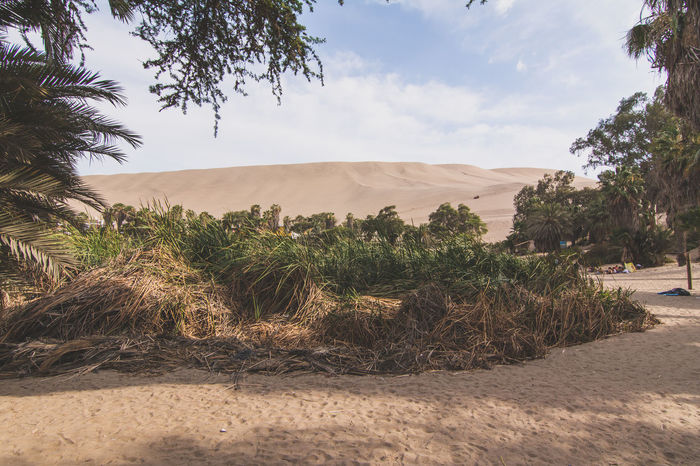 Arid Climate Beauty In Nature Cloud Cloud - Sky Day Desert Growth Huacachina Idyllic Landscape Mountain Nature No People Non Urban Scene Non-urban Scene Outdoors Plant Remote Rock Formation Scenics The Great Outdoors - 2016 EyeEm Awards Tranquil Scene Tranquility Travel Destinations Tree