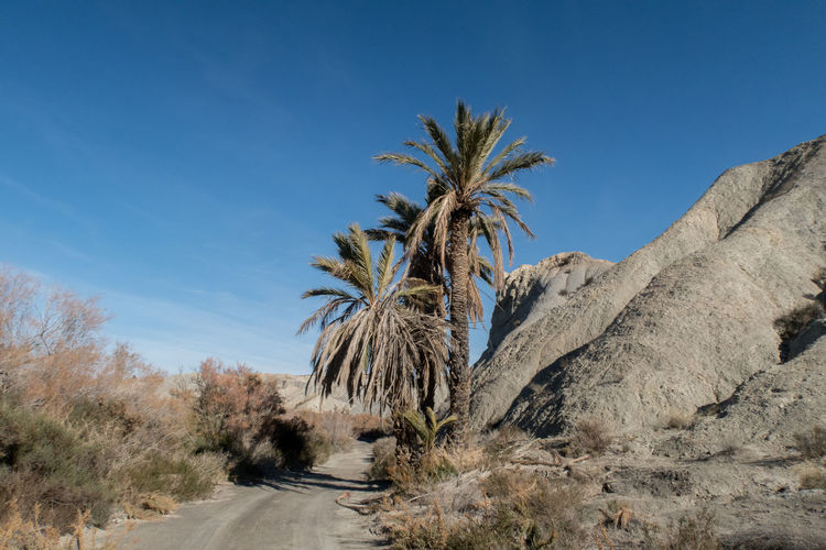 Andalucía Andalusia Desert SPAIN Arid Climate Beauty In Nature Clear Sky Day Europe Growth Landscape Nature No People Outdoors Palm Tree Sky Tabernas Tabernas Desert Tree Western Stay Out