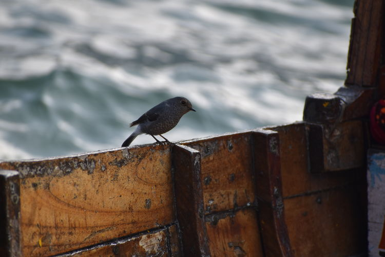 Bird perching on rusty metal
