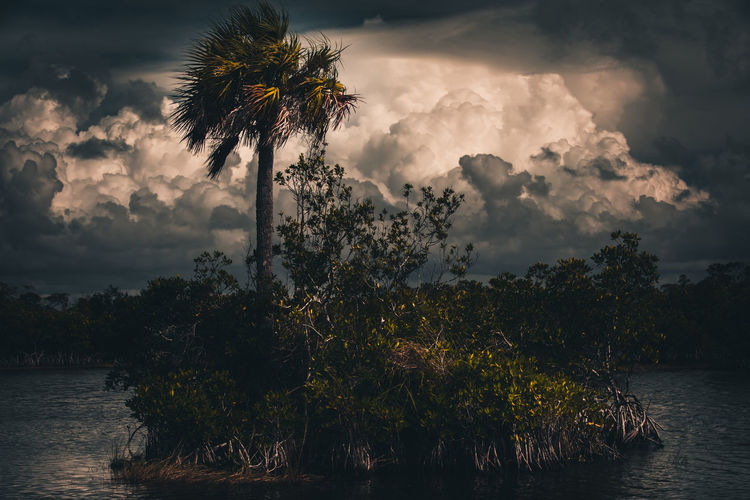 Plants and trees against sky during sunset