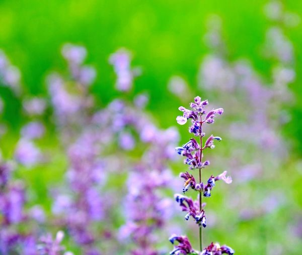 Flower close-up... Flowering Plant Flower Freshness Plant Beauty In Nature Fragility Vulnerability  Day Purple Focus On Foreground Close-up Blossom Outdoors Flower Head