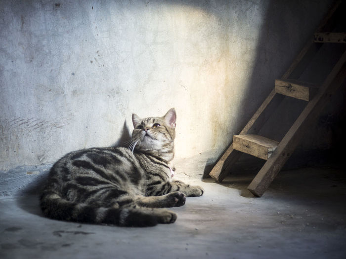 Alone Time Animal Themes Domestic Animals Domestic Cat Indoors  Loneliness Lying Down One Animal Pets