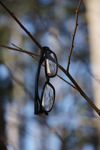 Close-up of wedding rings on branch