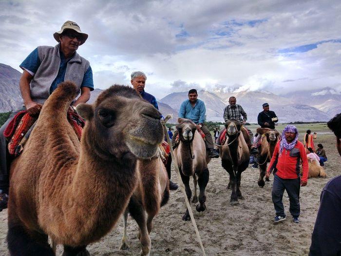@leh Cold Leh Ladakh.. Camel Riding Beautiful Weather♡ Headwear Riding Camel