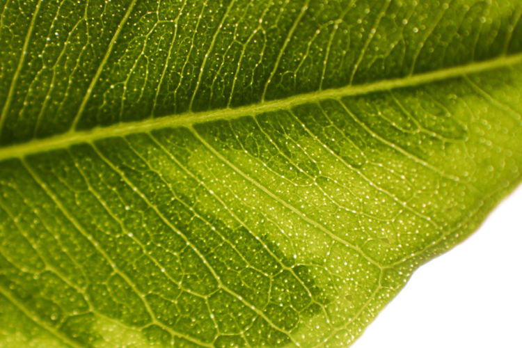 close up of green leaf Leaf Plant Part Green Color Leaf Vein Close-up Plant Nature No People Freshness Beauty In Nature Macro Growth Textured  Natural Pattern Wet Backgrounds Outdoors Drop Water Extreme Close-up Dew
