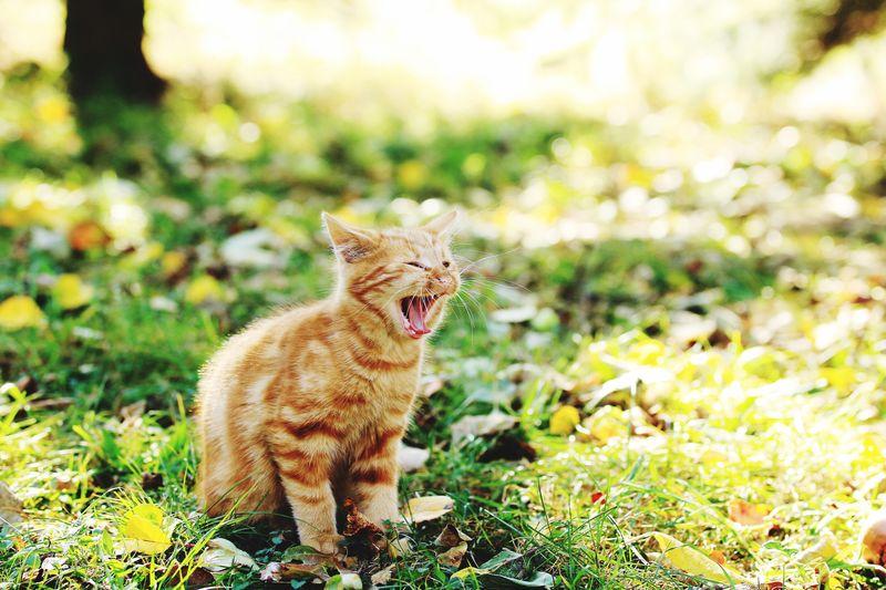 Bany cat