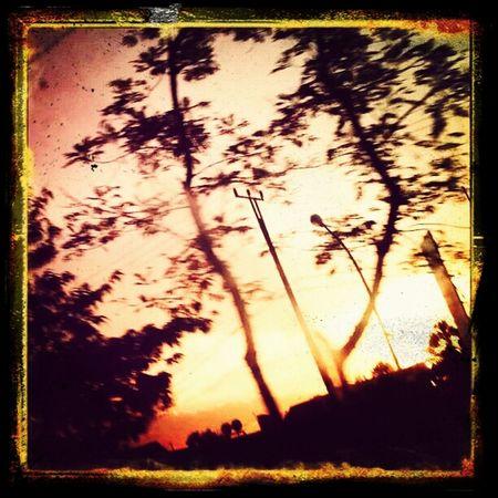 Taking Photos Sunset Silhouettes Silhouettes Treesilhouette Enjoying Life ♥ Mizz Nunuy Sunset EyeEm Sunset Sunset #sun #clouds #skylovers #sky #nature #beautifulinnature #naturalbeauty #photography #landscape EyeEm Indonesia