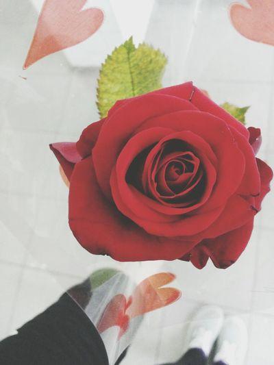 Flowers Beauty Cute Love