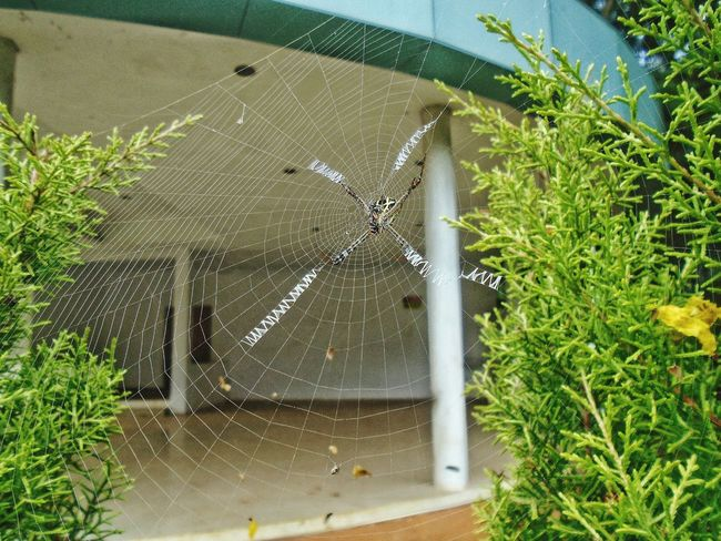 Day Outdoors Spider Web Green Color Nature No People Webdesign Creativity In Nature- Designed By Nature EyeEmNewHere