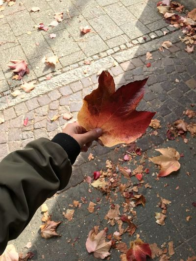 Leaf Change Autumn Leaves Dry Maple Leaf Fallen Nature One Person Outdoors Maple Cobblestone Day Beauty In Nature Footpath Real People Weather High Angle View Street Lifestyles