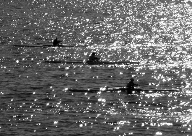 Black And White Blackandwhite Competition Exercise Rowing Rowing Boat Rowing Team Rowingboat Sea Monochrome Photography