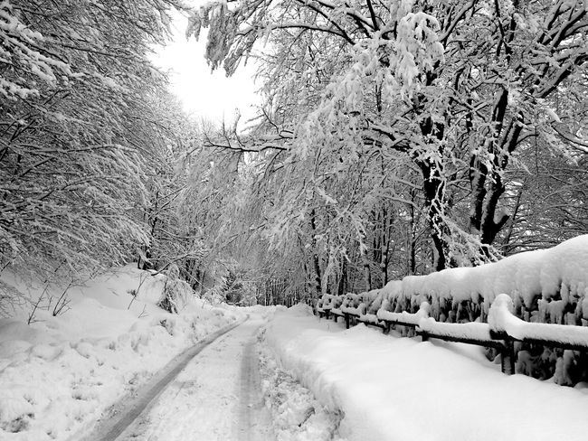 Black & White road MR7 Bare Tree Beauty In Nature Cold Cold Temperature Day Frozen Nature No People Outdoors Road Samsung Galaxy S7 Edge Scenics Snow Snowing The Way Forward Tranquility Tree Weather White Color Winter