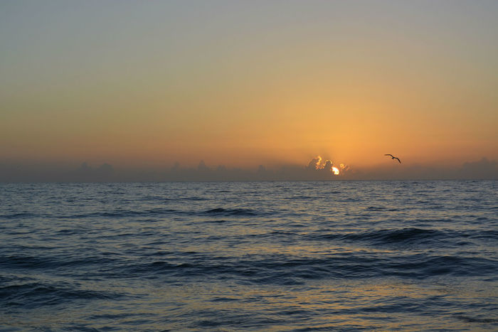 Birds In Flight Distant Clouds Horizon Over Water Idyllic Sea And Sky Seascape Sebastian, Fl Sunrise