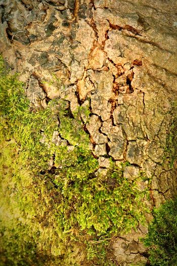 Tree Nature Moss Tree Trunk Close-up Biology BiologyAlbum Beauty In Nature Nature