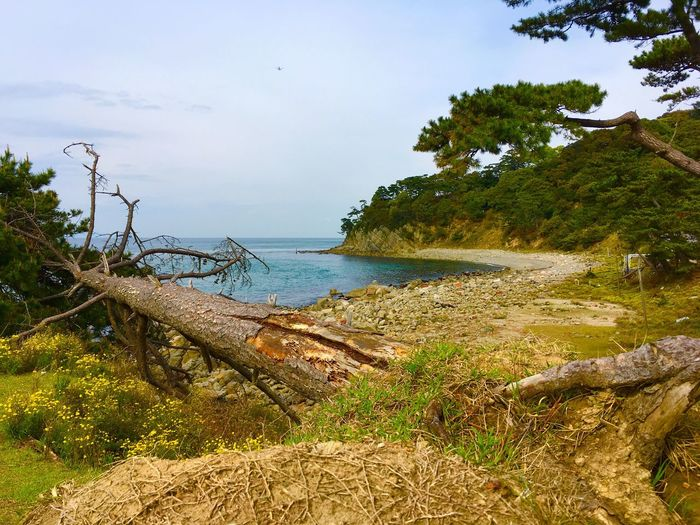 Sea Nature Water Beach Beauty In Nature Scenics No People Tree Outdoors Sky Tranquility Day Landscape IPhoneography