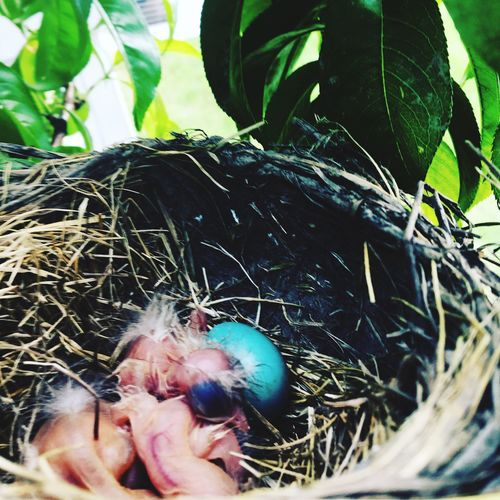 Baby birds. Close-up Nature New Life First Eyeem Photo