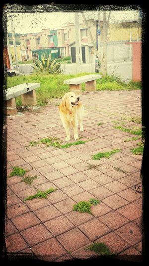 My little dog First Eyeem Photo