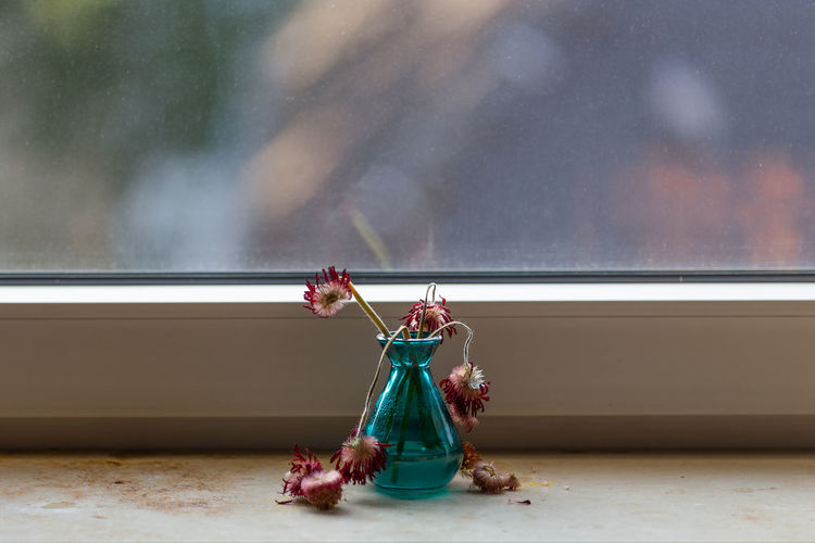Close-up of wilted flowers in vase on window sill