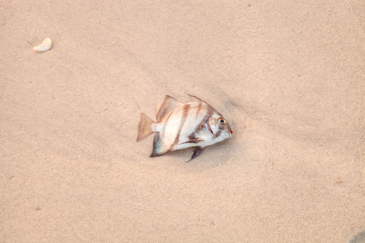 High angle view of dead fish on beach