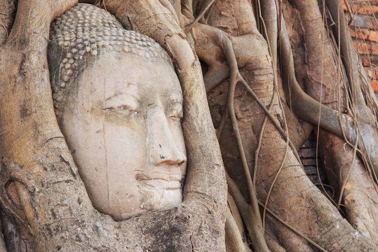 Buddha Head in the Wat Maha That temple in Ayutthaya, Thailand ASIA Ayutthaya   Thailand Bangkok Buddha Cambodia Religion Temple