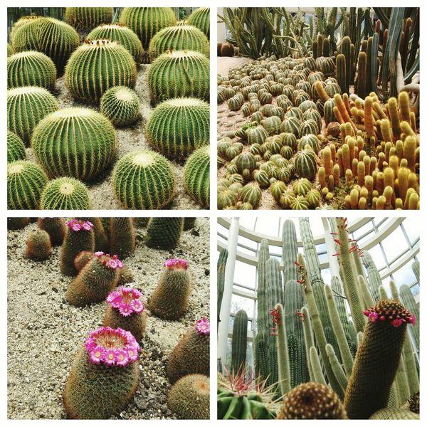 Xiamen 植物園 清明 Laoyi 2015  朝聖者