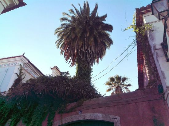 Check This Out MySchool Palm Tree Low Angle View Day Lookingup The Week On EyeEem Tree And Sky Garden Architecture Architecture Ar Colour Of Life