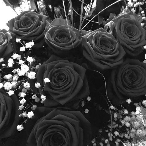 I love roses! Black Blackandwhite Blackroses Blumen Bnw Bouquet Bunch Bunch Of Flowers Bunchofroses Dark Darkflowers Darkroses Decoration Flower Flower Arrangement Flowers Monochrome Nature Rose - Flower Rosen Rosenstrauß Roses Rose🌹 Rosé Schwarzerosen Welcome To Black Black And White Friday
