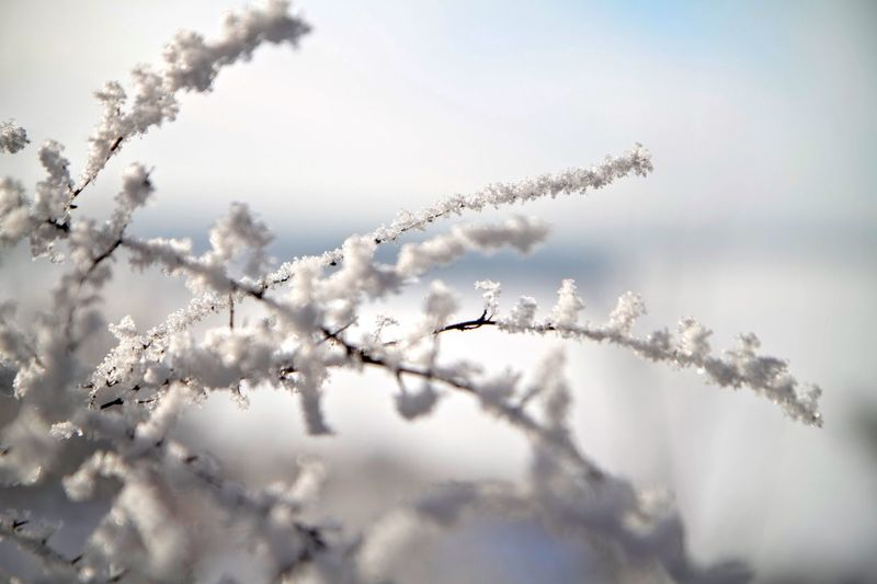 Frost Frost Frosty Snow Winter Cold Suomi Finland Shades Of Winter