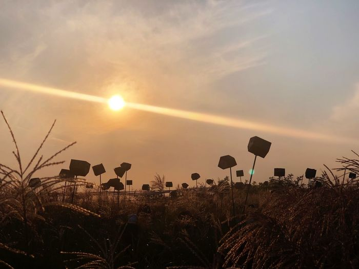 🐦 🏠 ShotOnIphone Sky Sunset Sun Plant Beauty In Nature Nature Growth Sunlight Land Tranquility Tranquil Scene Scenics - Nature Field Sunbeam Cloud - Sky No People Lens Flare Orange Color Flower Silhouette