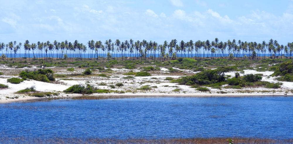 Capivara River, Camaçari, Bahia, Brazil Bahia Brazil Camaçari Beach Beauty In Nature Blue Brasil Coastal Lagoon Coconut Trees Imbassai Laggon Nature River Sky Tranquil Scene Tranquility Tree Water