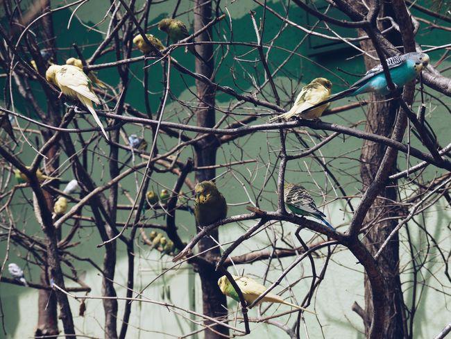 Birds_collection Birds Of EyeEm  Plant Tree Branch Day Nature Bird