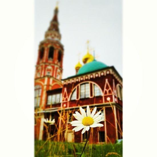 Nature Church Daisy