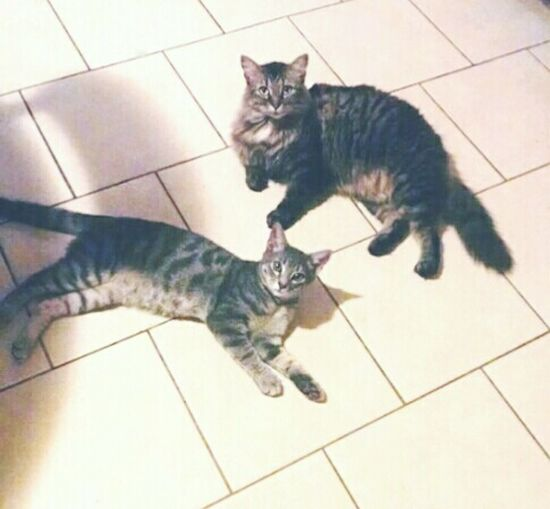 ♥♥♥My lovely cats!♥♥♥ My Cats Cute Pets Cats Lovelovelove KAWAII Purrfect Sebastian and Kitty Cute
