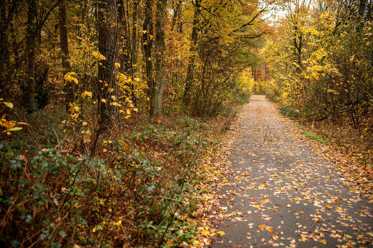 Autumn Tree Plant Change Forest Plant Part Leaf Direction The Way Forward Land Nature No People Beauty In Nature Road Tranquility Non-urban Scene Footpath Scenics - Nature Landscape WoodLand Outdoors Diminishing Perspective Autumn Collection
