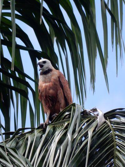 🦅 Photography Travel Eyemphotography Bolivia Amazone Travel Destinations Animal Themes Palm Tree Animal Wildlife Perching